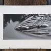 Lebensfluss<br /> cluster 10/3<br /> Papierdruck Hahnemühle Photorag<br /> 45x24<br /> Passepartout 60x40<br /> <br /> Hahnemühle Photo Rag ist das klassische Fine Art Papier. Es ist ein echtes Langsiebpapier aus reiner Baumwollfaser mit einer wunderbar matten, natürlich samtigen Oberfläche - die Referenz für hochwertige Naturpapiere mit seiner einzigartigen Inkjetbeschichtung