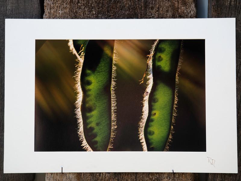 Lichtabsorbierende Frucht<br /> cluster 12/1<br /> Papierdruck Hahnemühle Silk Baryta<br /> 45x30<br /> Passepartout 60x40<br /> <br /> Photo Silk Baryta 310 ist ein weißes, seidenglänzendes Barytpapier mit der Anmutung eines klassischen Dunkelkammer Fotopapiers. Die einzigartige Bariumsulfatbeschichtung sorgt für ein außergewöhnliches Bildergebnis mit sehr großem Farbraum, cremigen Weißtönen und samtig tiefem Schwarz.