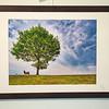 Der etwas weniger einsame Baum, cluster 32/2<br /> Papierdruck Epson Coldpress Bright 43x32<br /> Foto Ralph de Rozario ©2019<br /> inklusive Holzrahmen 60x40 mit sichtbarer Maserung, Nussbaum<br /> Deutlich texturiertes säurefreies Druckmedium auf 100% Baumwollbasis für den optimalen Kunst- oder Portraitdruck mit einer fast reinweissen Oberfläche. Dieses Papier nutzt die modernsten Inkjetbeschichtungen, die besonders großen Farbraum und hohe Dichten erreichen.