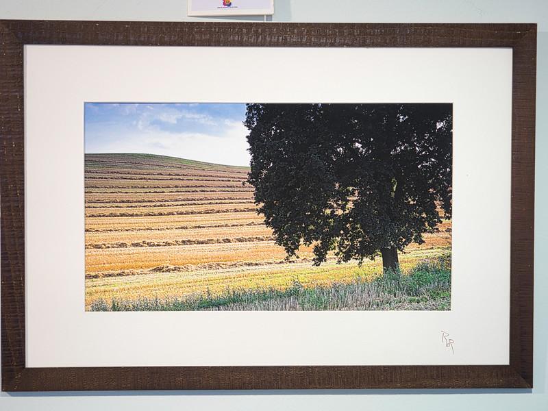 Windows 5, cluster 26/2<br /> Papierdruck Epson Coldpress Bright 45x26<br /> Foto Ralph de Rozario ©2018<br /> inklusive Holzrahmen 60x40 mit sichtbarer Maserung, Nussbaum<br /> <br /> Deutlich texturiertes säurefreies Druckmedium auf 100% Baumwollbasis für den optimalen Kunst- oder Portraitdruck mit einer fast reinweissen Oberfläche. Dieses Papier nutzt die modernsten Inkjetbeschichtungen, die besonders großen Farbraum und hohe Dichten erreichen.