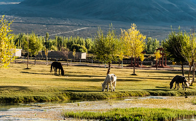 horses at sindhu ghat_DSC2920