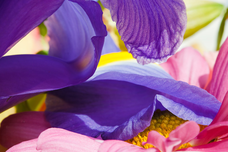 Inside a Bouquet