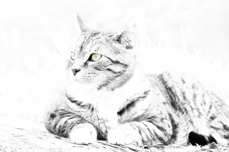High Key Cat