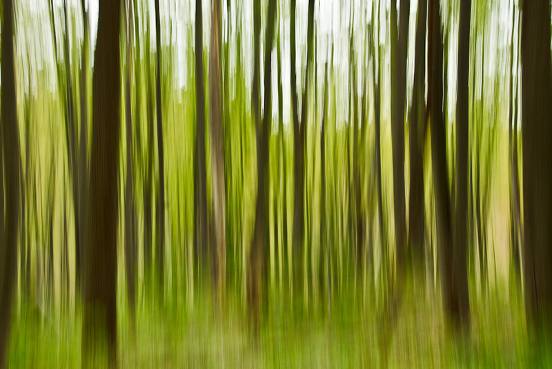 Greening of the Forest