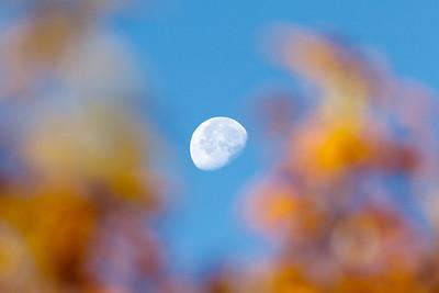 Harvest Moon?