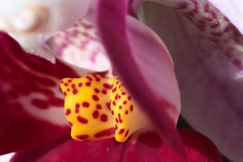 TEN-orchid2