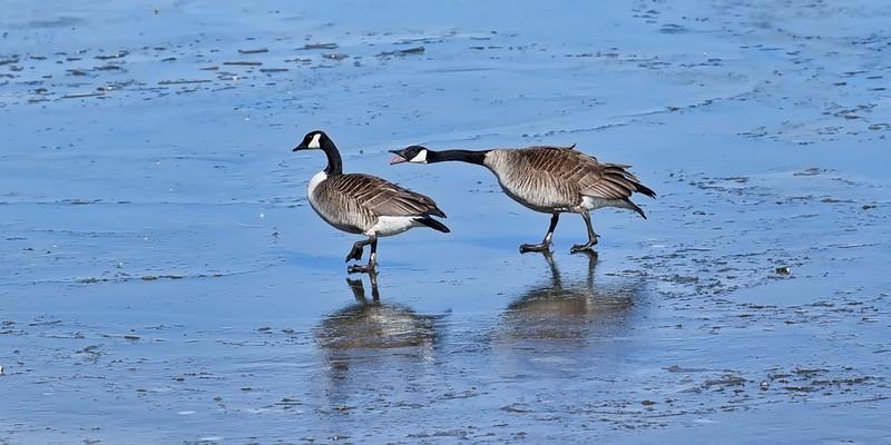 Gladys...We're Walking on Water!!!