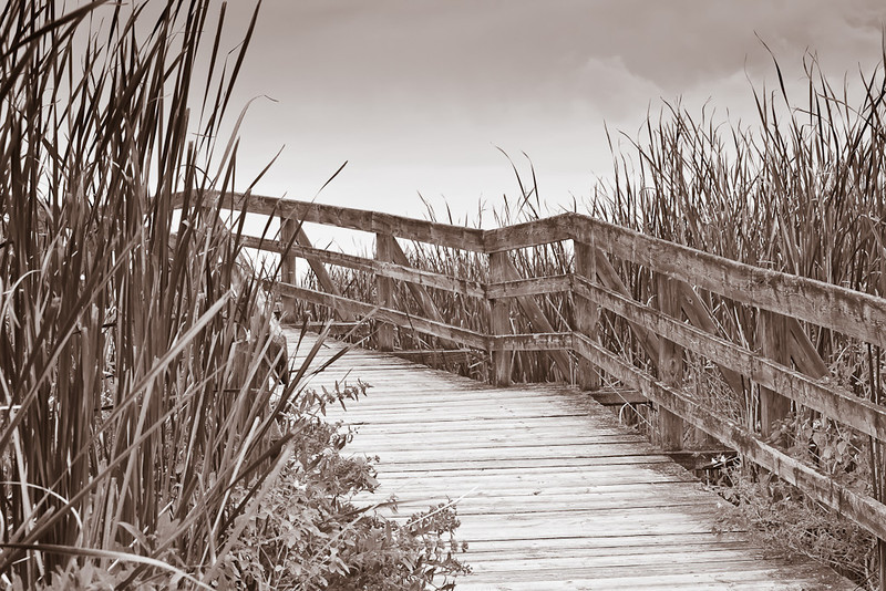 Boardwalk Through the Marsh