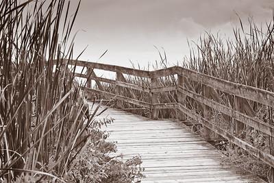 Boardwalk Through the Marsh