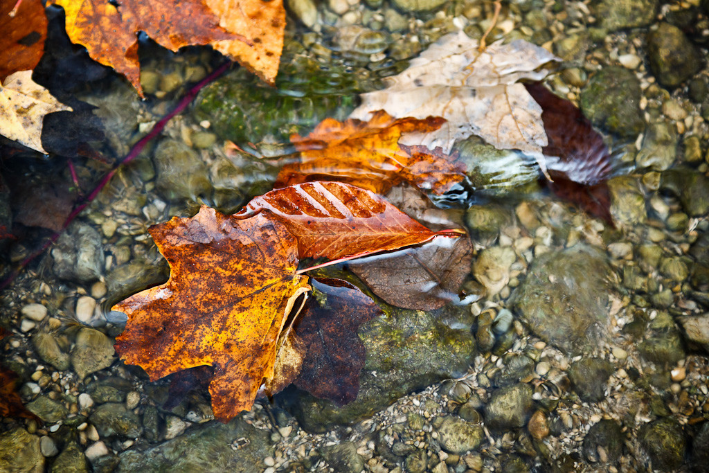 Autumn Washed Away