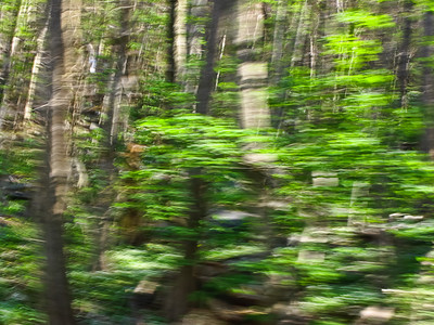 Greening Forest