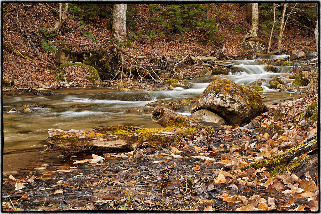 Silver Creek in November