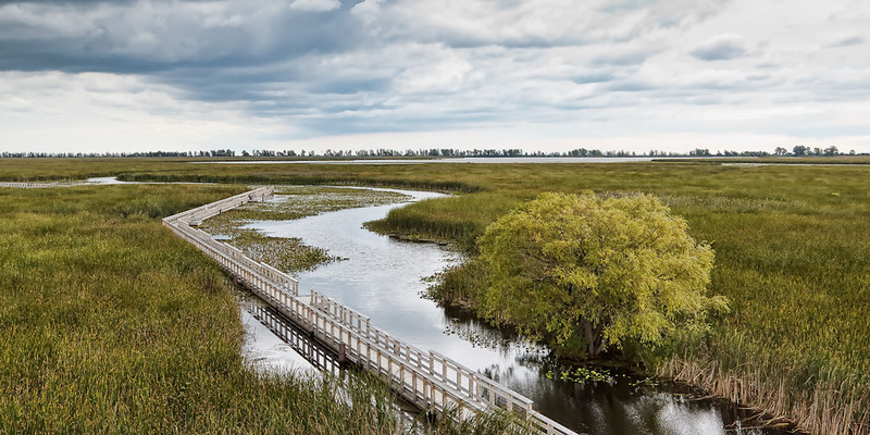 Point Pelee Marsh