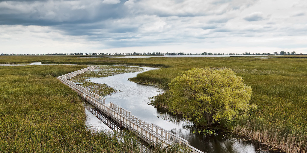 Point Pelee Marsh