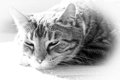 Solar Kitty is Recharging - Please Wait!