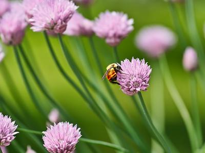 Bee in the Breeze