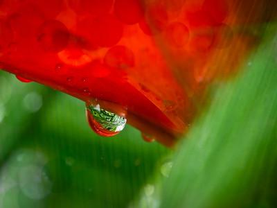 Deep in the Garden