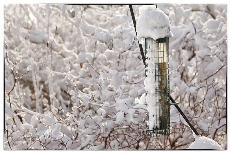 Don't Worry Birdies - It'll Melt