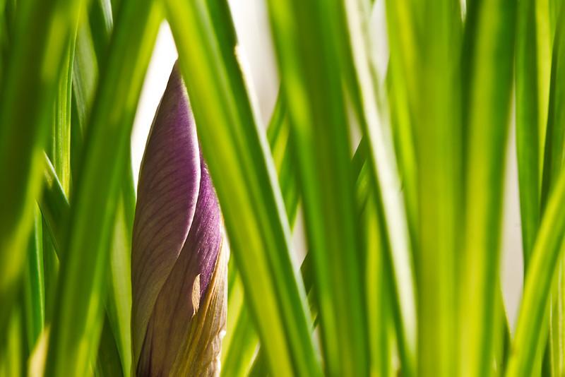A Peek at Spring