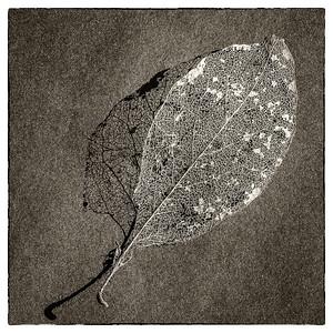 Ghosts of Seasons Past #3