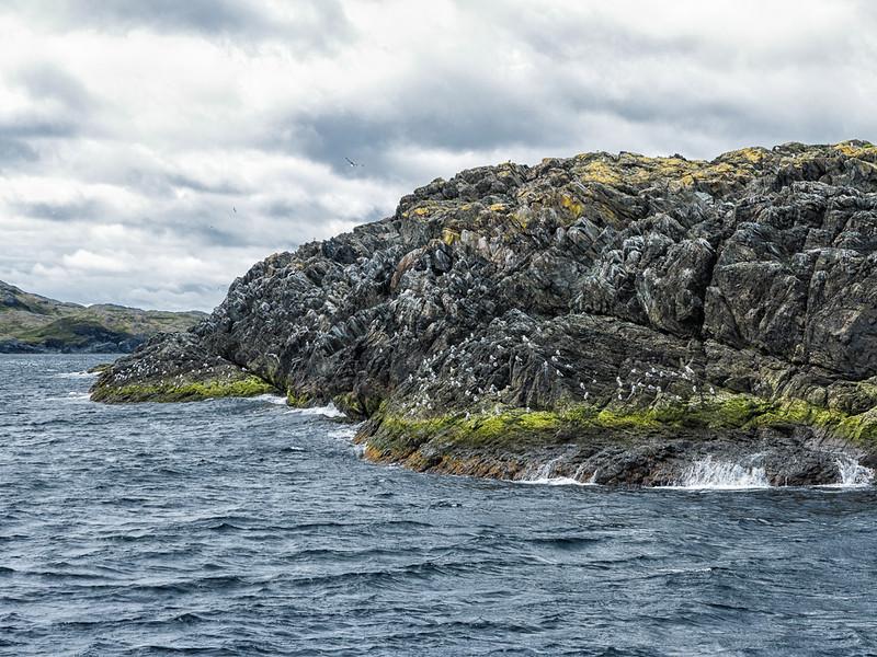 Newfoundland Trip #26 - Kittiwake Colony