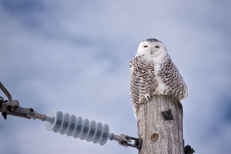 Pole-sitting?