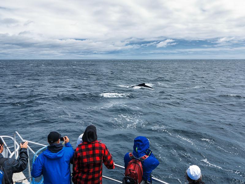 Newfoundland Trip #22 - Humpback Whale
