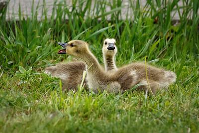 MOM!!! He's Bugging Me!