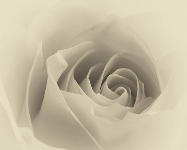 """""""The rose speaks of love silently, in a language known only to the heart."""""""