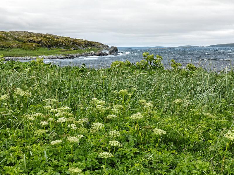 Newfoundland Trip #10 -  L'Anse aux Meadows.