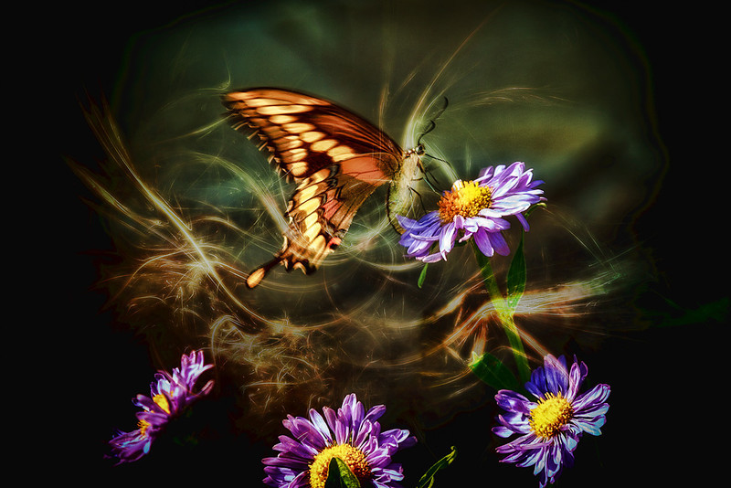 Butterfly Magic #1