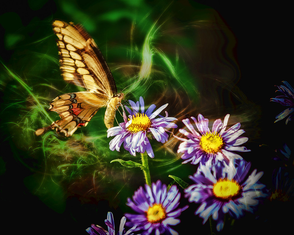 Butterfly Magic #4