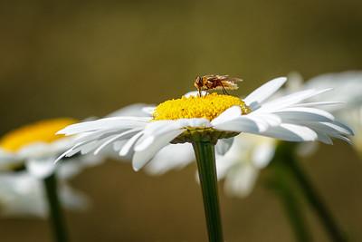 Bee-utiful #2