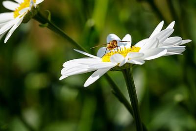 Bee-utiful #1
