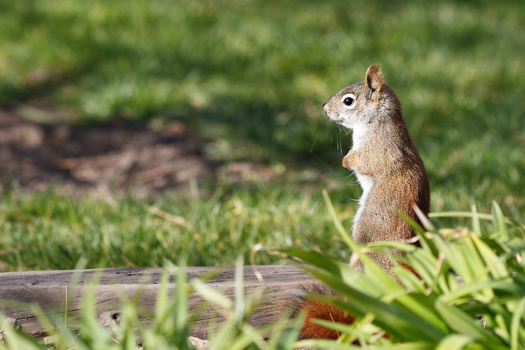 Little Squirrel, Big Attitude