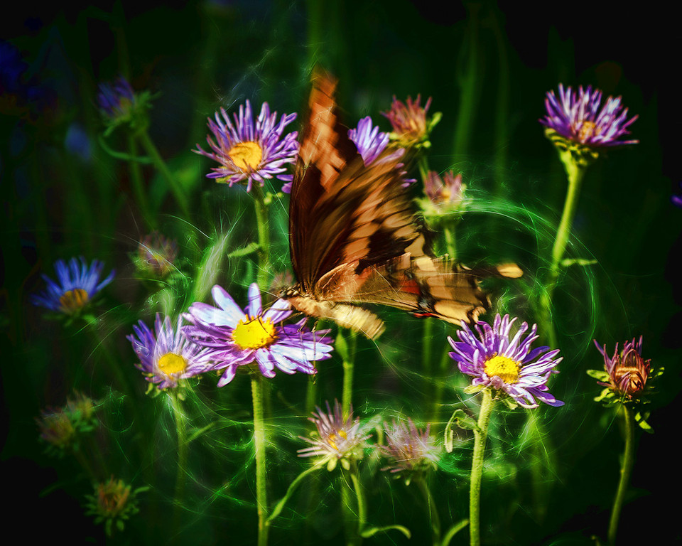 Butterfly Magic #3