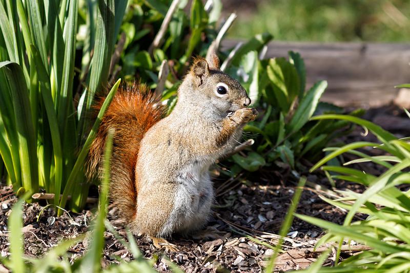 Little Squirrel, Big Attitude