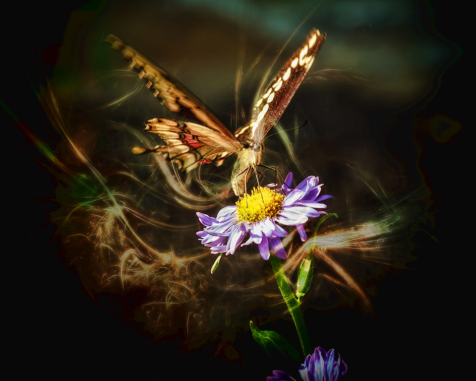 Butterfly Magic #2