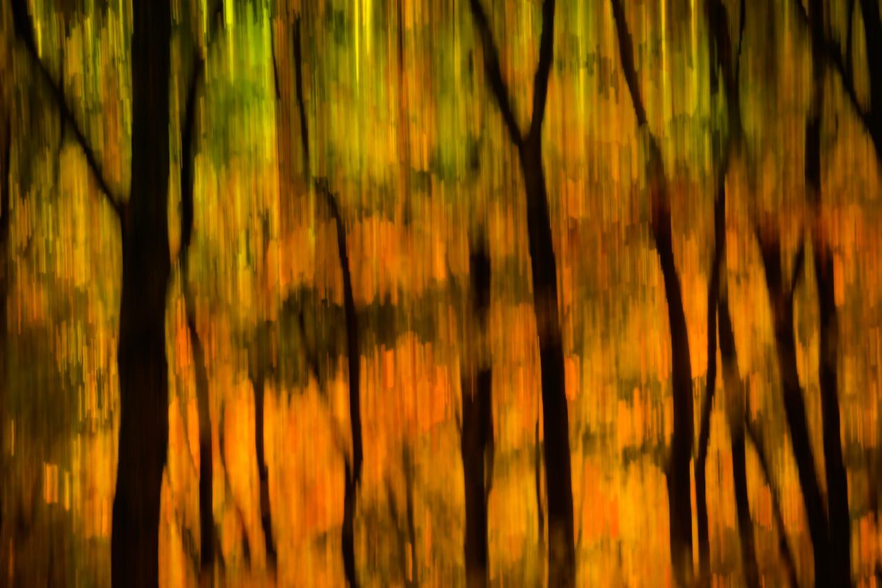 October Forest #2