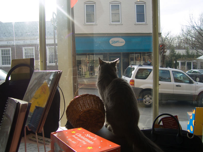 Books & Co., W Nelson Street, Lexington VA.  we usually try and stop for a meal in Lexington if we're driving the Western route home from Rock Hill SC.  this also means a visit to the book store and its playful kitty.