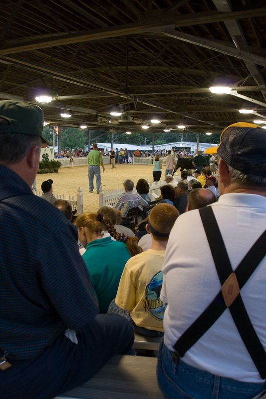 bidders and spectators enjoy the auction action