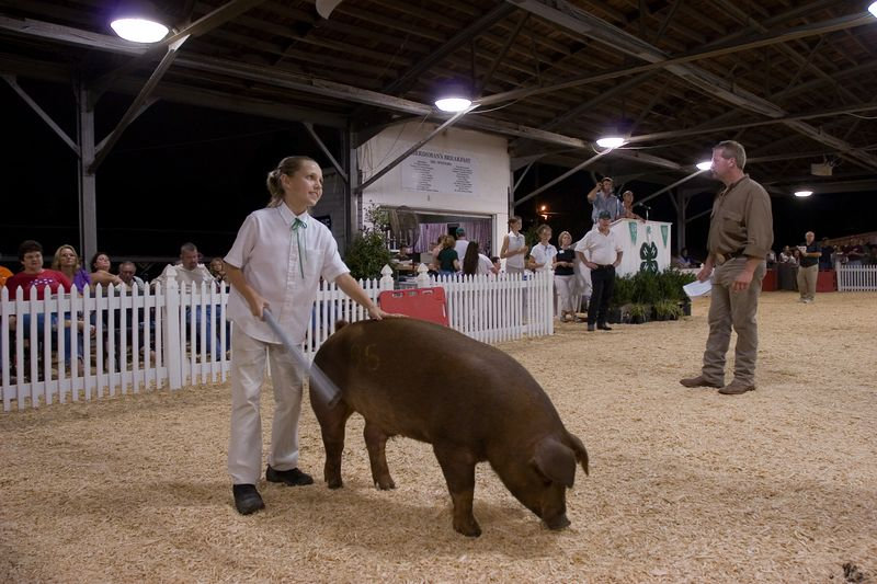 pig no. 96 sold for about $4 a pound