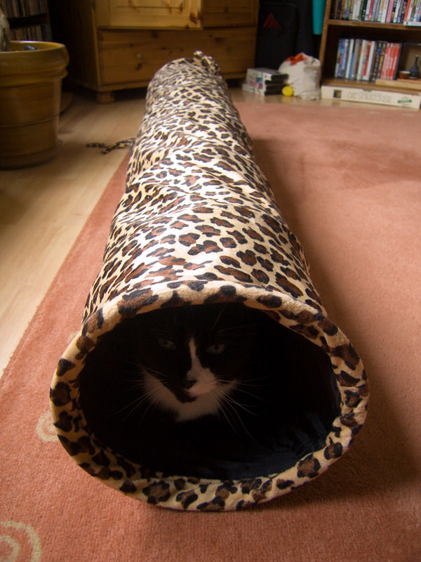 pavlov in his new toy, the kitty tunnel.  the tunnel was a gift from his friends, penny and peanut.