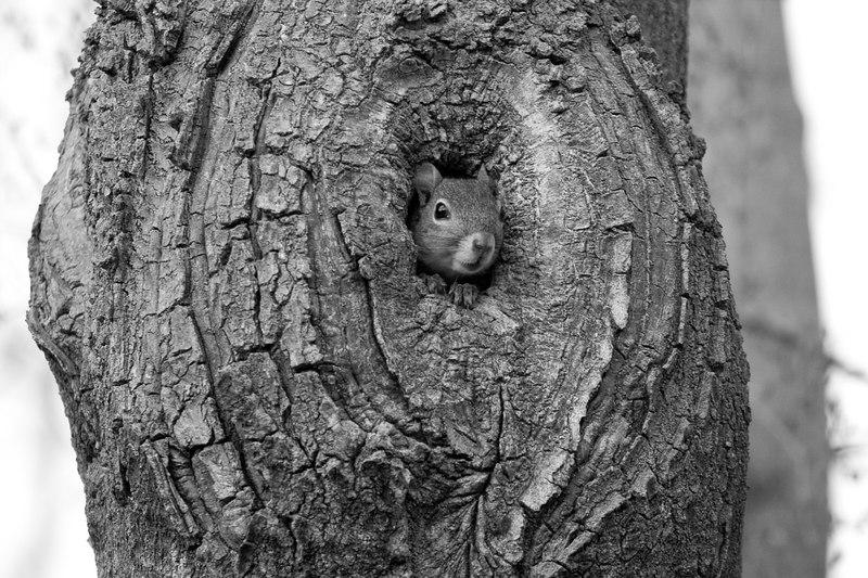 fauna along the Chessie Trail, Lexington VA
