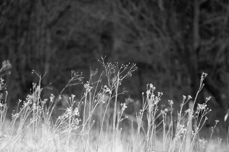 flora along the Chessie Trail, Lexington VA
