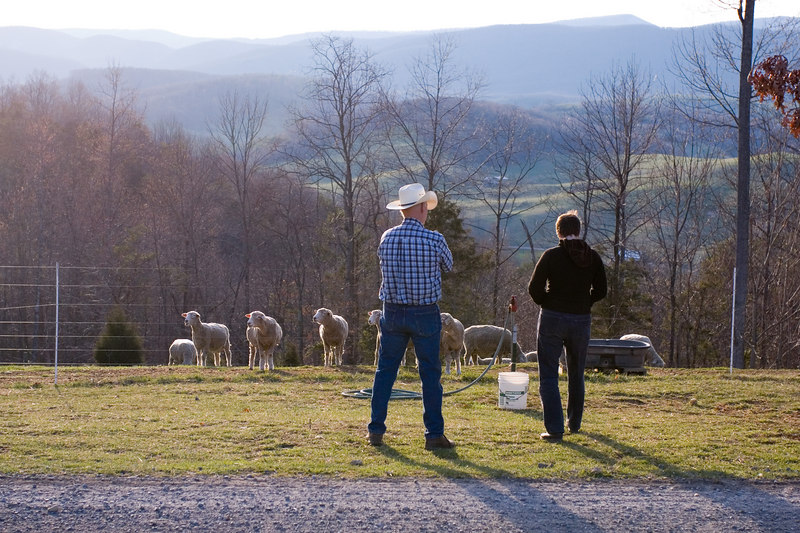 Ron and Leigh look out over the valley while the ewes wonder if it's dinner time yet.