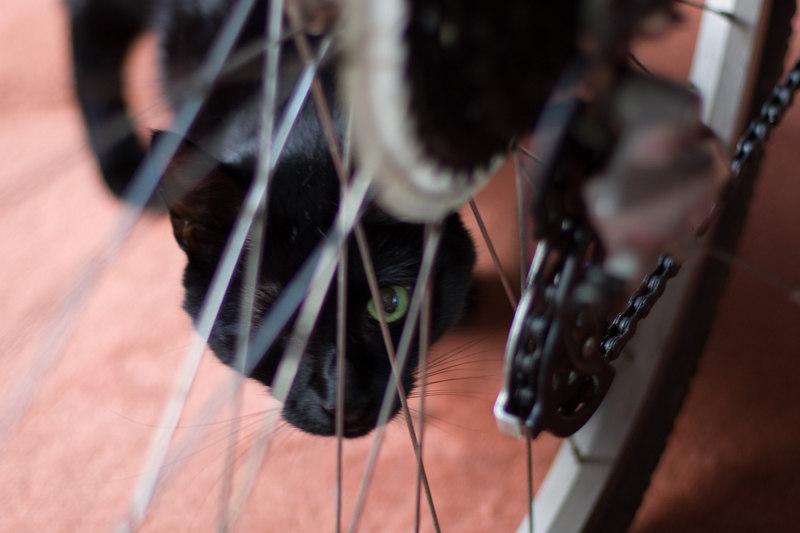 eliot behind leigh's bike