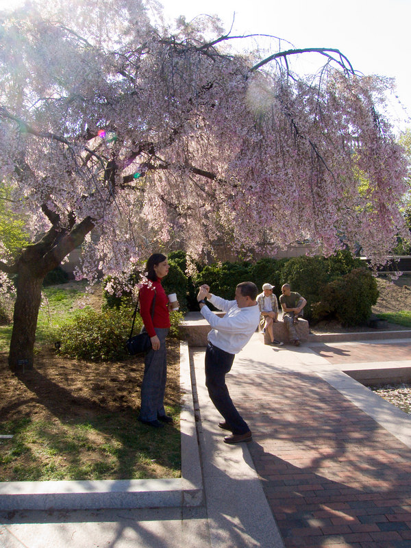 some serious posing under a blossoming tree in the garden next to the Sackler gallery.