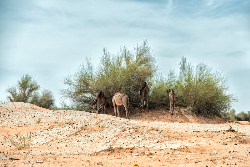 One day in Mauritania