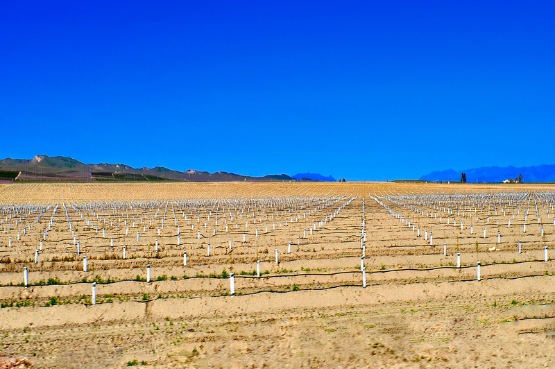 vineyards in California